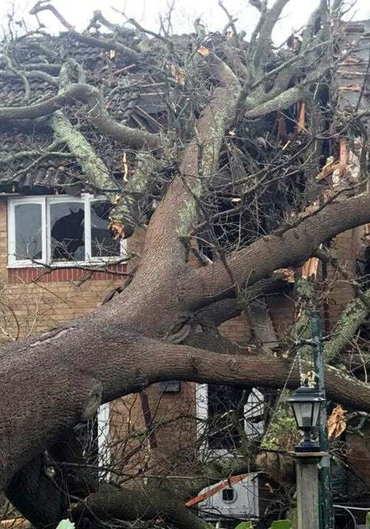Storm damage can be prevented, like this fallen tree which could have been removed beforehand.